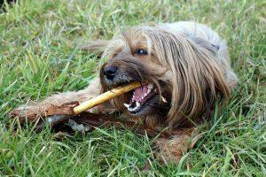 סוגי מברשות שיניים לכלבים